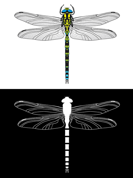 High Contrast and Tactile Dragonfly.