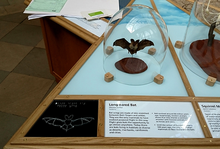 Long Eared Bat in context.