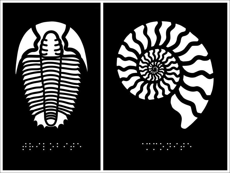 The artwork or a sample tactile metal panel, for Acuity Design, featuring a Trilobite and an Ammonite.